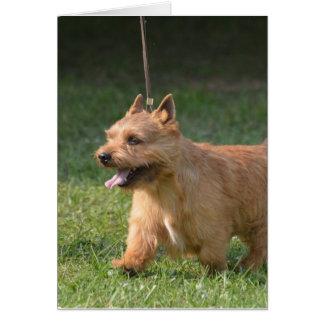 Adorable Glen of Imaal Terrier Cards