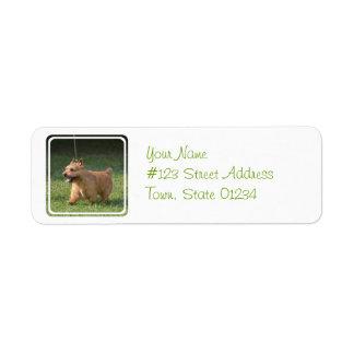 Adorable Glen of Imaal Terrier Return Address Label