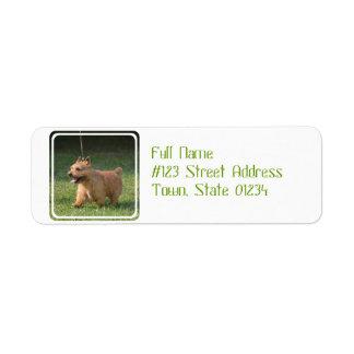Adorable Glen of Imaal Terrier Custom Return Address Label