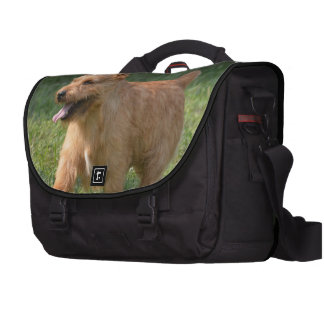 Adorable Glen of Imaal Terrier Laptop Messenger Bag