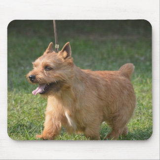Adorable Glen of Imaal Terrier Mouse Pad