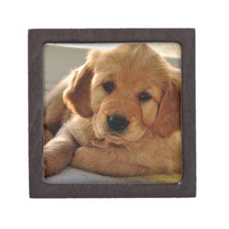 Adorable Golden Retriever puppy dog Gift Box