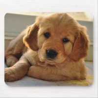 Adorable Golden Retriever puppy dog Mouse Pad