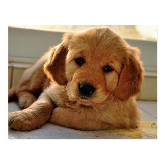 Adorable Golden Retriever puppy dog Postcard