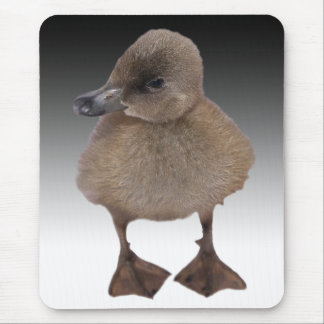 Adorable Gray Duckling Photograph Mouse Pad