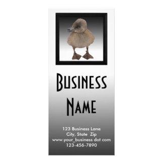 Adorable Gray Duckling Photograph Rack Card