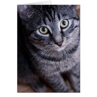 Adorable Grey Cat Card