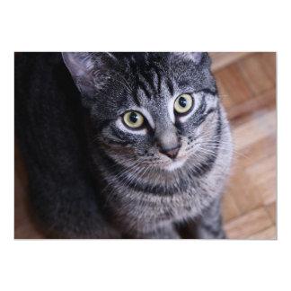 Adorable Grey Cat Face Card