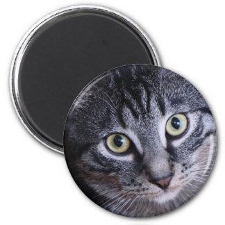 Adorable Grey Cat Magnet