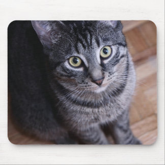 Adorable Grey Cat Mouse Pad