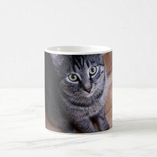 Adorable Grey Cat Classic White Coffee Mug