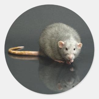 Adorable Grey Rat Round Sticker