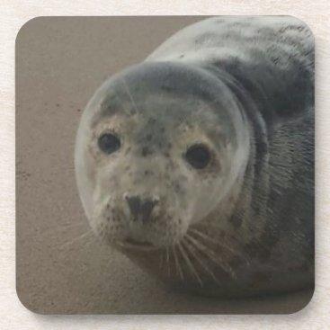 Beach Themed Adorable grey seal pup baby coaster