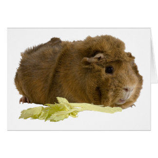 Adorable Guinea Pig Eating Celery Photography Card