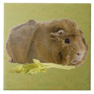 Adorable Guinea Pig Eating Celery Photography Ceramic Tile