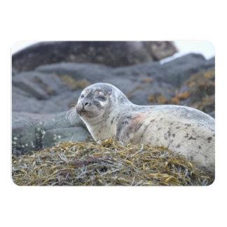 Adorable Harbor Seal 5x7 Paper Invitation Card
