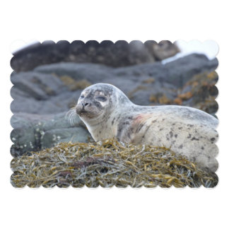 Adorable Harbor Seal Cards