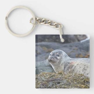Adorable Harbor Seal Acrylic Keychains