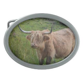 Adorable Highland Cow Oval Belt Buckle