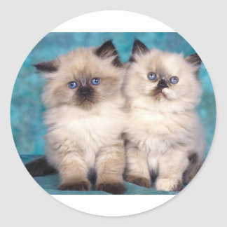 "Adorable ""Hug Me"" Persian Kittens Classic Round Sticker"