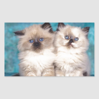 "Adorable ""Hug Me"" Persian Kittens Rectangular Sticker"