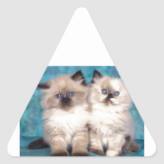 "Adorable ""Hug Me"" Persian Kittens Triangle Sticker"