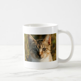 Adorable Inquisitive Baby Tabby Kitten Classic White Coffee Mug