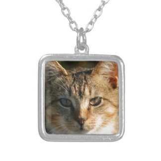 Adorable Inquisitive Baby Tabby Kitten Necklaces