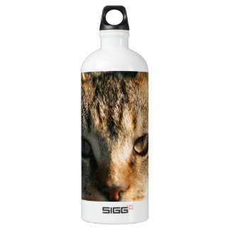 Adorable Inquisitive Baby Tabby Kitten Water Bottle