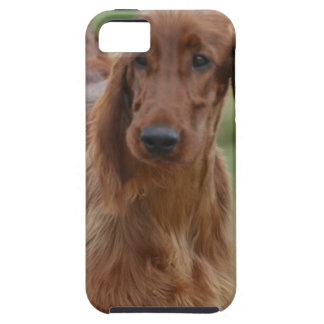 Adorable Irish Setter iPhone SE/5/5s Case