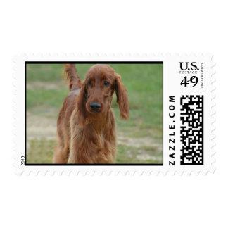 Adorable Irish Setter Postage Stamp