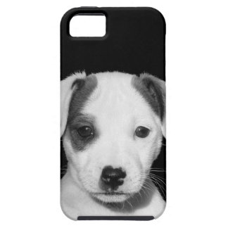 Adorable Jack Russell Terrier Puppy iPhone SE/5/5s Case