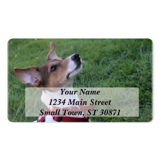 adorable jack russell terrier  puppy obedient dog pack of standard business cards