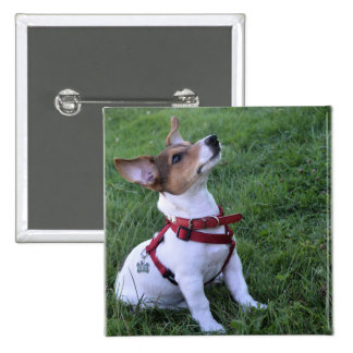 adorable jack russell terrier  puppy obedient dog 2 inch square button