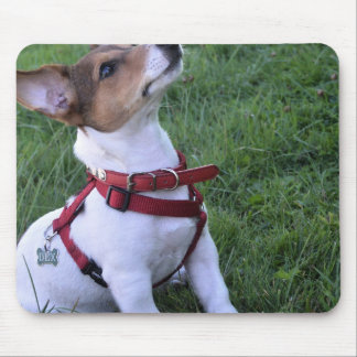 adorable jack russell terrier  puppy obedient dog mouse pad