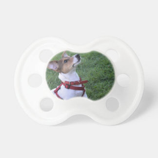 adorable jack russell terrier  puppy obedient dog BooginHead pacifier