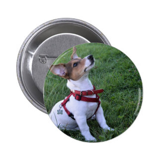 adorable jack russell terrier  puppy obedient dog pinback button