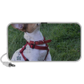 adorable jack russell terrier  puppy obedient dog mini speakers
