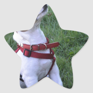 adorable jack russell terrier  puppy obedient dog star sticker