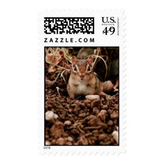 Adorable Juvenile Chipmunk Postage