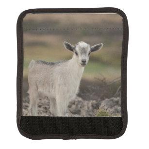 Adorable Kid Goat Handle Wrap