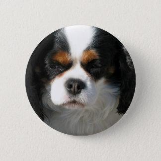 Adorable King Charles Spaniel Button