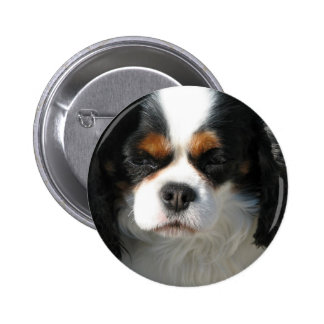 Adorable King Charles Spaniel Button