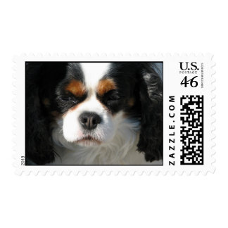 Adorable King Charles Spaniel Postage Stamp