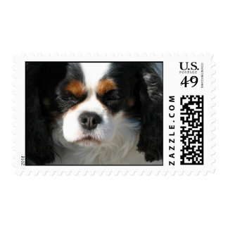 Adorable King Charles Spaniel Stamp
