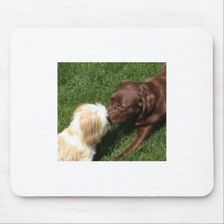 Adorable kissing Shihtzu and Chocolate Lab dogs Mouse Pad