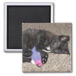 ADORABLE KITTEN 2 INCH SQUARE MAGNET