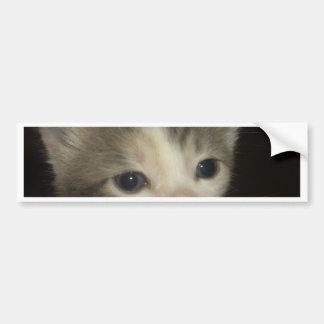 Adorable Kitten Face Bumper Sticker