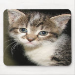 Adorable kitten mouse pad