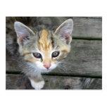 Adorable kitten post cards